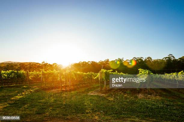 Nature and vineyards in summer