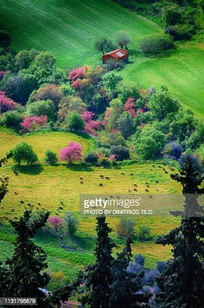 Nature at Fanari envirosns,Karditsa 4