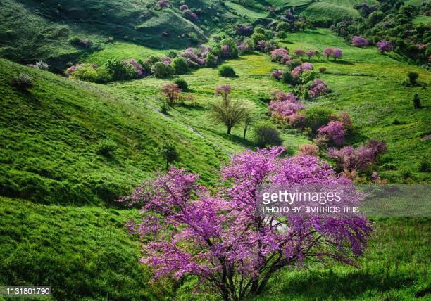 Nature at Fanari envirosns,Karditsa 6