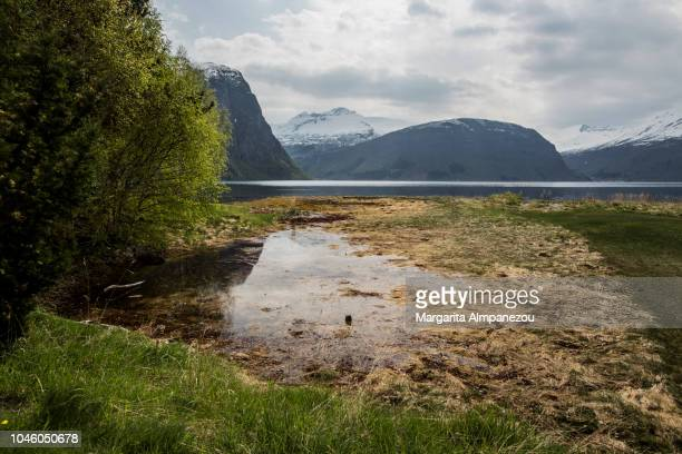 Nature at the Norwegian fjords