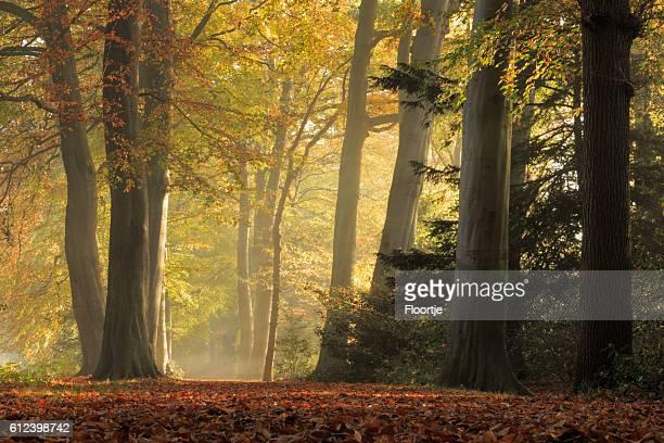Nature : Forêt d'automne