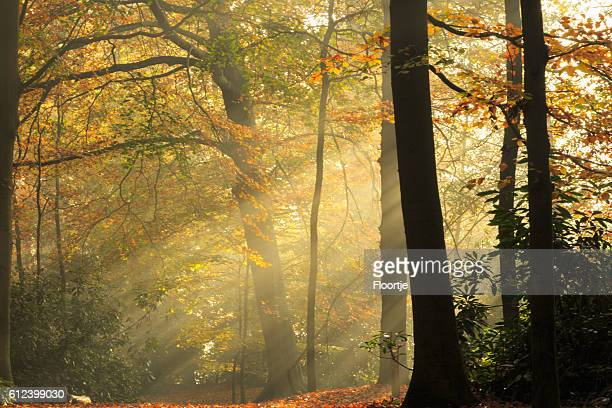 Nature: Autumn Forest