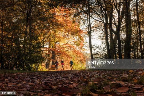 Aard: Autumn Forest