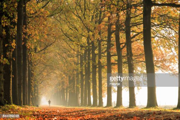 nature: autumn forest - autumn falls stock pictures, royalty-free photos & images