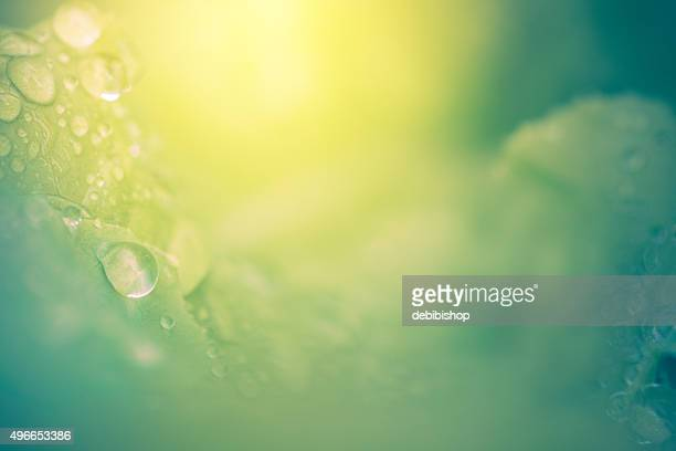 Nature Background - Abstract Leaves Dew Drops & Sunshine
