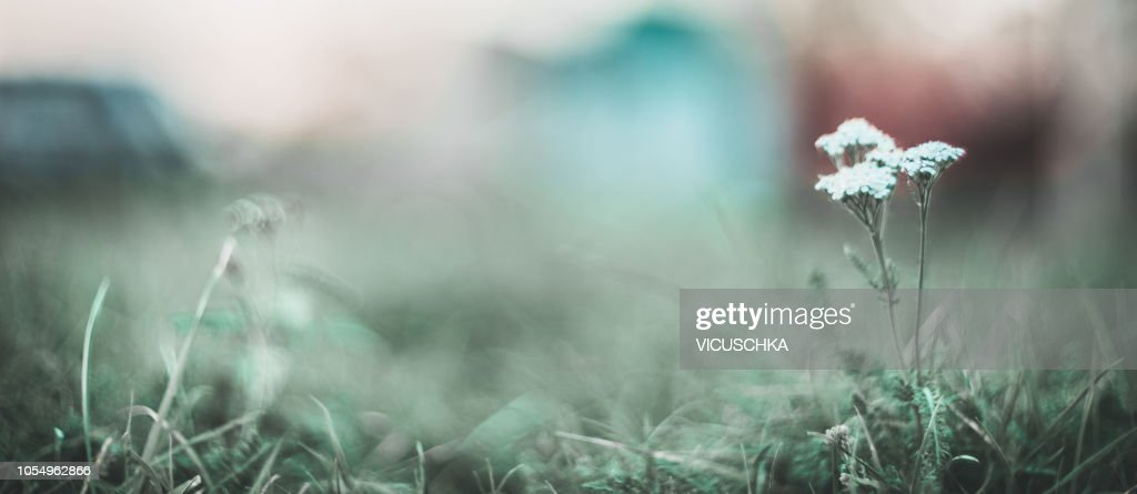 Nature Background Banner With Wild Grasses And Flowers At Boke High Res Stock Photo Getty Images
