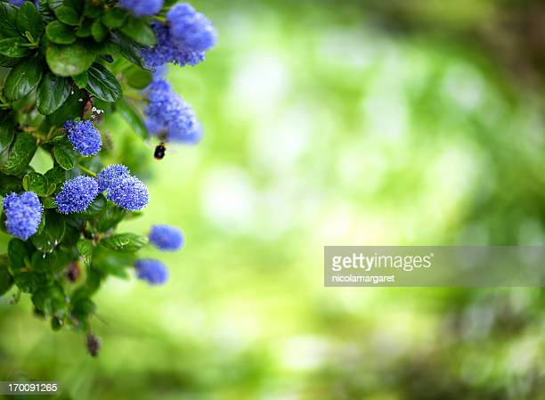 Nature background with blue flowers