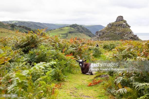 nature, devon, england - lynton stock pictures, royalty-free photos & images