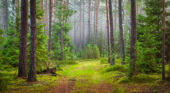 Nature forest landscape. Green summer forest 1040838800