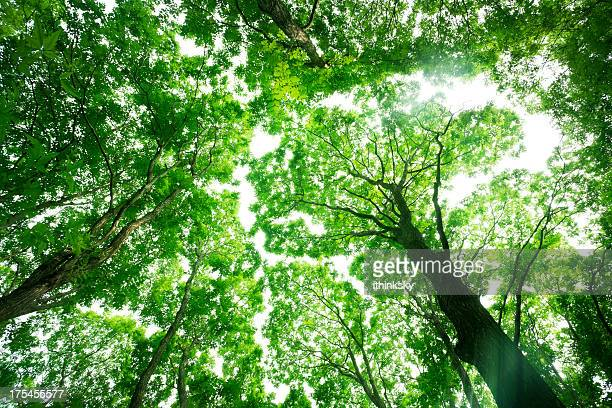 nature forest - treetop stock photos and pictures