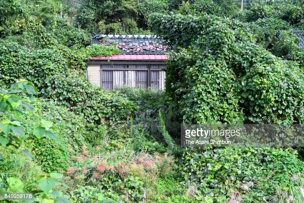 Nature has overrun houses along National Route 114 on September 20 2017 in Namie Fukushima Japan A 27kilometer section of National Round 114 was...
