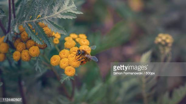 nature image - nature stock pictures, royalty-free photos & images