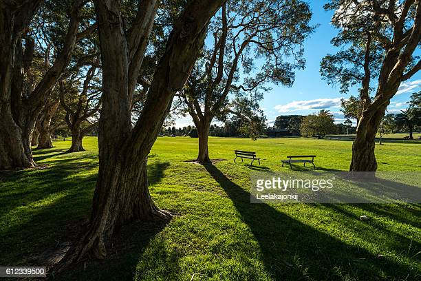 Nature in Beautiful park in Sydney.