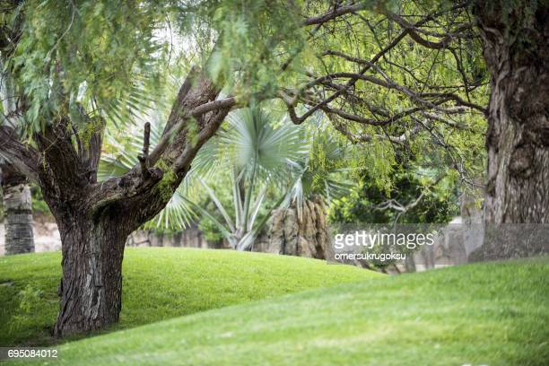 Natuur in Valencia