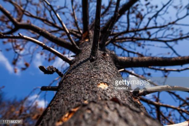 nature - incendie, terre brûlée - ガール県 ストックフォトと画像