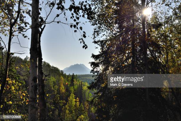 nature is having a festival for those willing to show up and share - chugach state park stock pictures, royalty-free photos & images