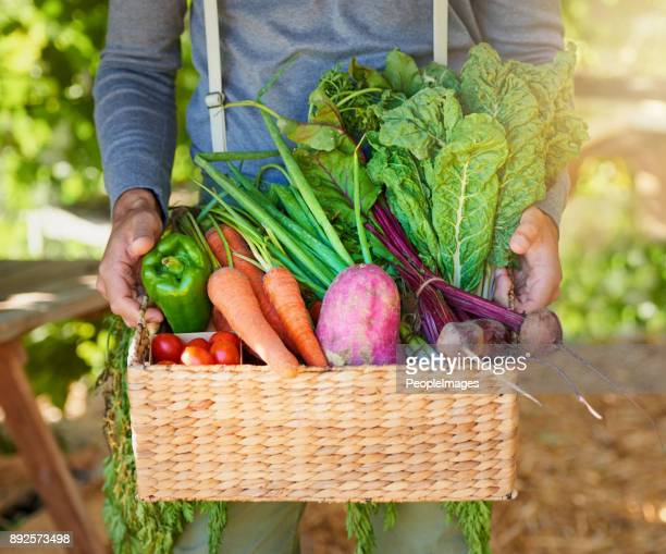 nature knows best - basket stock photos and pictures