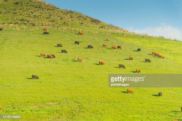nature landscape of a green field with cow - nature reserve stock pictures, royalty-free photos & images