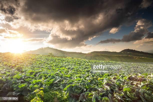 nature landscape scenic sunrise and mist on mountain view at the north at phu thap boek, phetchaboon thai thailand - boek stock-fotos und bilder