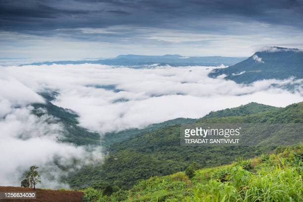 nature landscape scenic sunrise and mist on mountain view at the north at phu thap boek, phetchaboon thai thailand - boek stock pictures, royalty-free photos & images