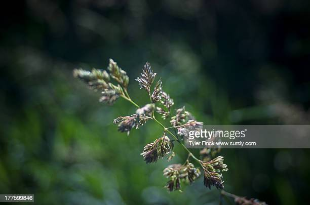 nature macro plant - sursly stock pictures, royalty-free photos & images