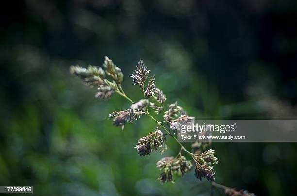 Nature Macro Plant
