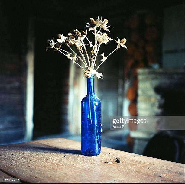 nature morte - harjumaa stock pictures, royalty-free photos & images