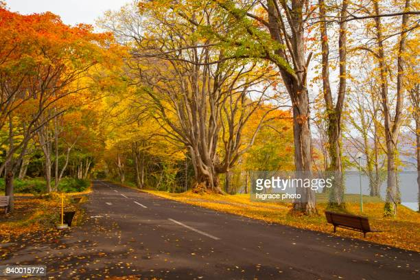 Nature of the Mystic Lake,Towadako, Mystic Lake, landscapes, Lake Towada, aomori, autumn, Lake Towada National Park