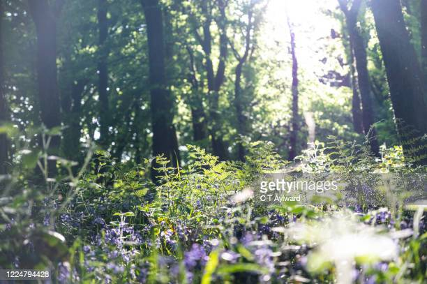 nature on the woodland floor - lush stock pictures, royalty-free photos & images