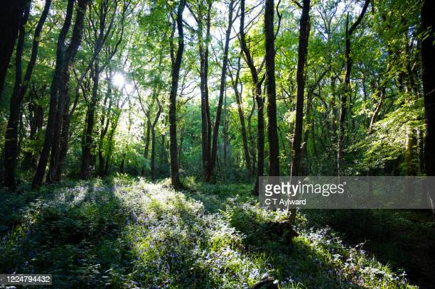 nature on the woodland floor - tree stock pictures, royalty-free photos & images
