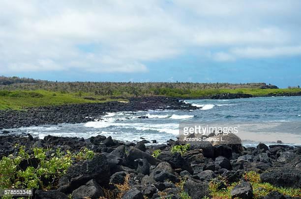 nature panoramic at santa cruz. galapagos - puerto ayora stock pictures, royalty-free photos & images