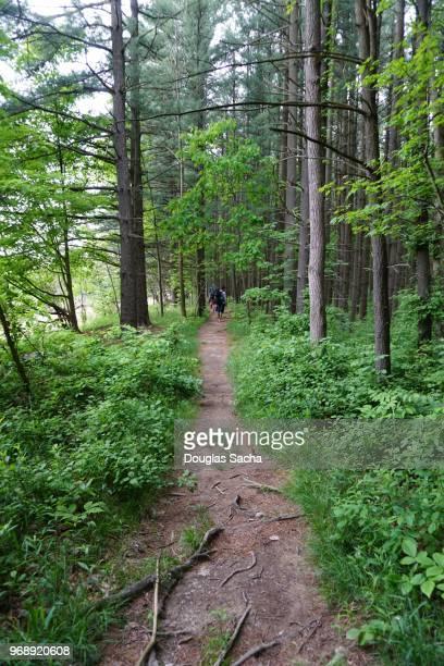nature path in the wilderness - pfadfinder stock-fotos und bilder