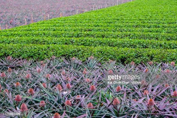 nature pattern - ナマクワランド ストックフォトと画像