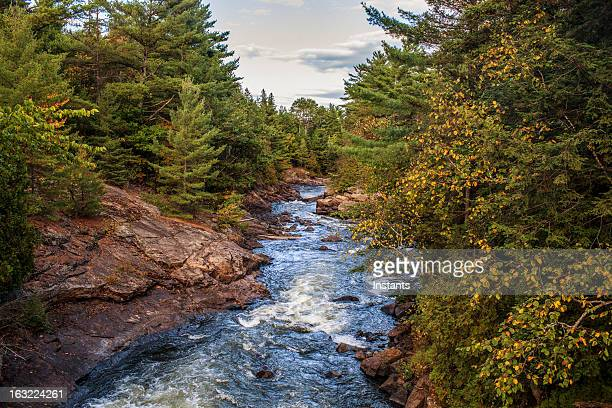 nature - shawinigan stock pictures, royalty-free photos & images