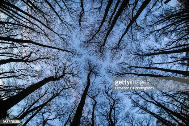 uk nature - bare tree stock pictures, royalty-free photos & images
