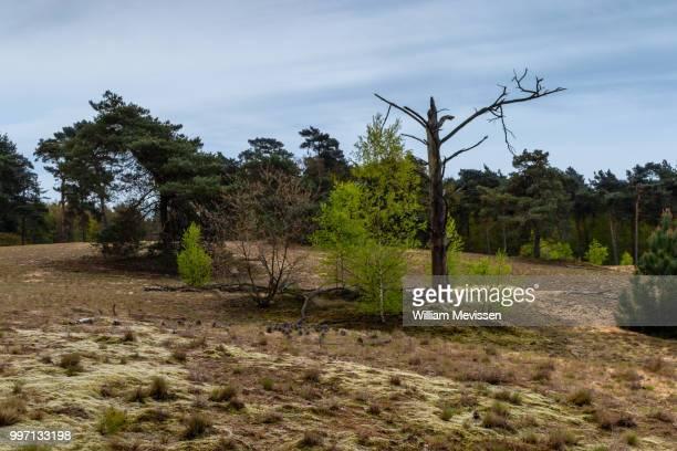 nature - william mevissen fotografías e imágenes de stock