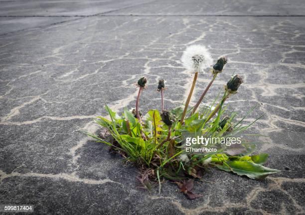 Nature reconquers concrete pavement