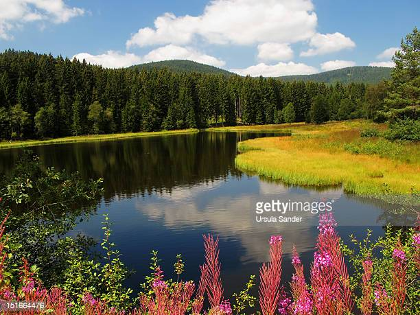Nature reflected in Schluchsee in Black Forrest