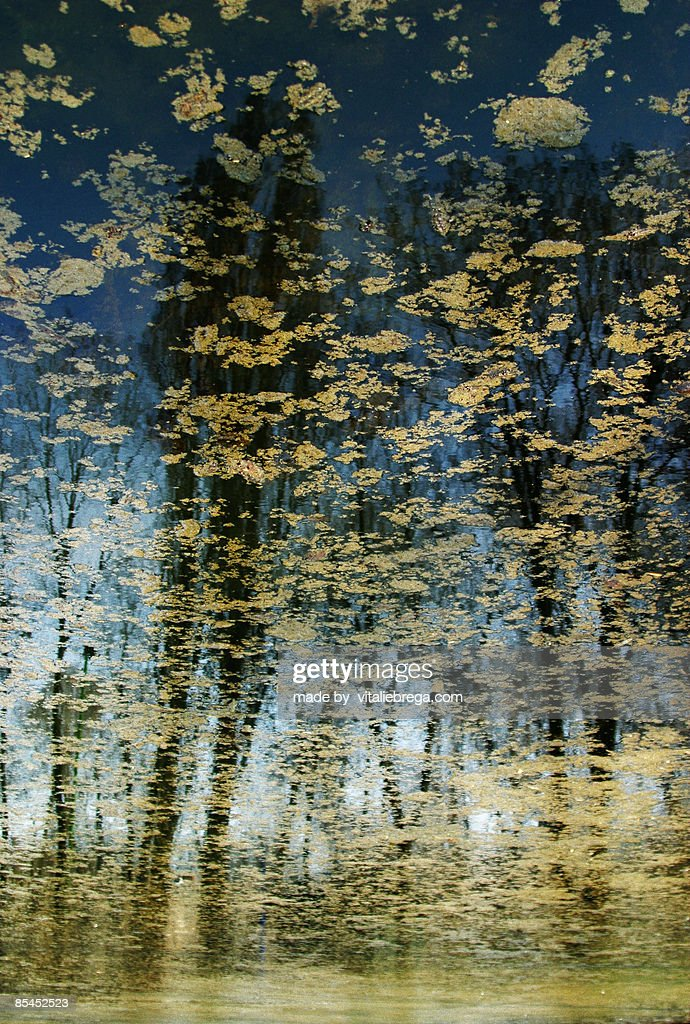 Nature reflected in the water. : Stock Photo