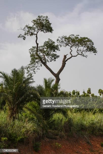 nature scenes, togo - togo fotografías e imágenes de stock