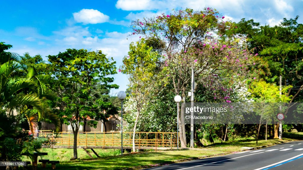 Nature shows its strength and exuberance even within the city and amidst poles, bridges and paved streets. : Stock Photo
