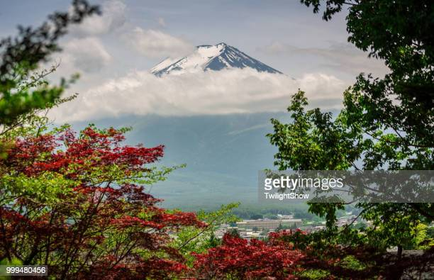 Nature summer of blossoms tree with Mount Fuji in Japan
