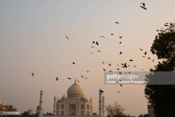 nature & the taj mahal - celebrity death stock pictures, royalty-free photos & images