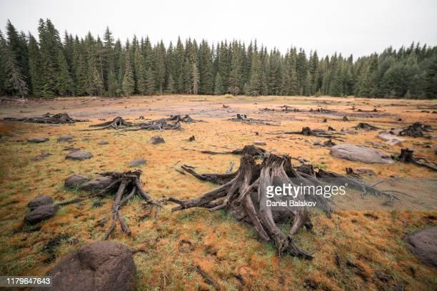 自然。よく考えろ環境被害と意識。 - 持続可能な開発目標 ストックフォトと画像