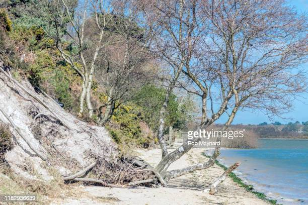 a nature trees at the wild beach - smurfs: the lost village stock pictures, royalty-free photos & images