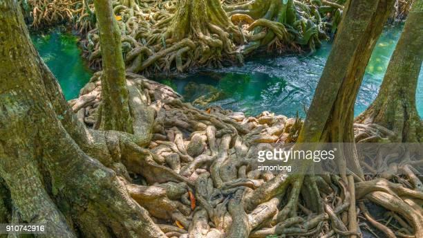 nature viewing of tha pom khlong song nam - origens - fotografias e filmes do acervo