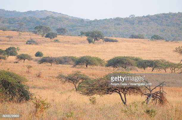 nature views at african safari - noam galai stock pictures, royalty-free photos & images