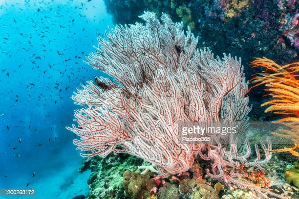 natures carbon capture system underwater coral reefs - photosynthesis stock pictures, royalty-free photos & images