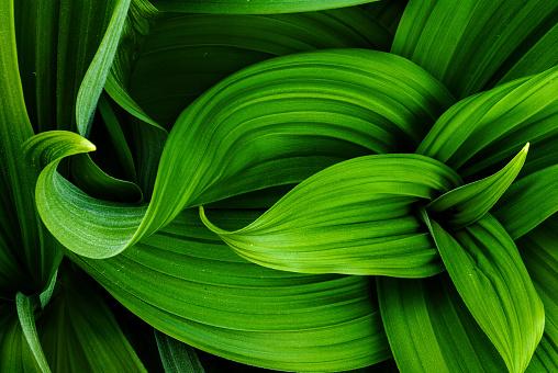 Nature's design - gettyimageskorea