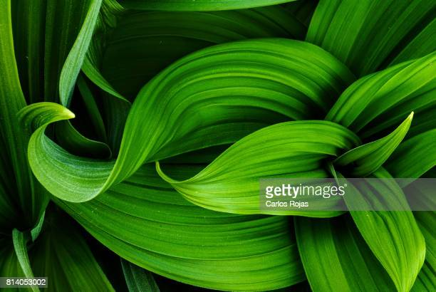 nature's design - natural pattern stock pictures, royalty-free photos & images
